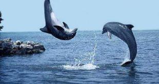صورة صور مناظر جميلة , احلى مناظر البحر