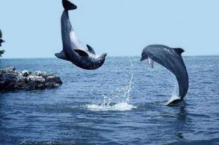 بالصور صور مناظر جميلة , احلى مناظر البحر 4668 10 310x205