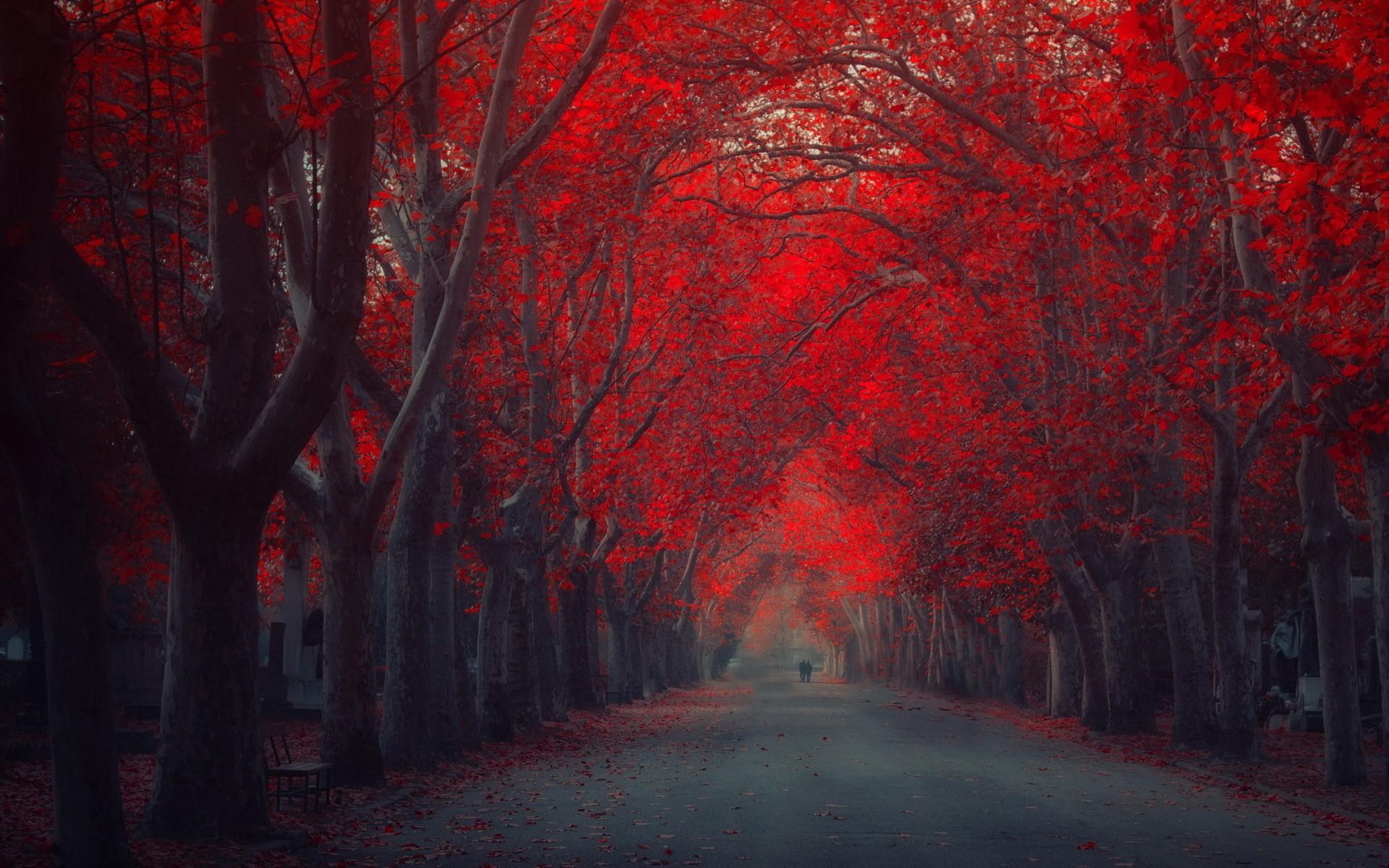 بالصور خلفية حمراء , خلفيات حصرية باللون الاحمر 4670 3