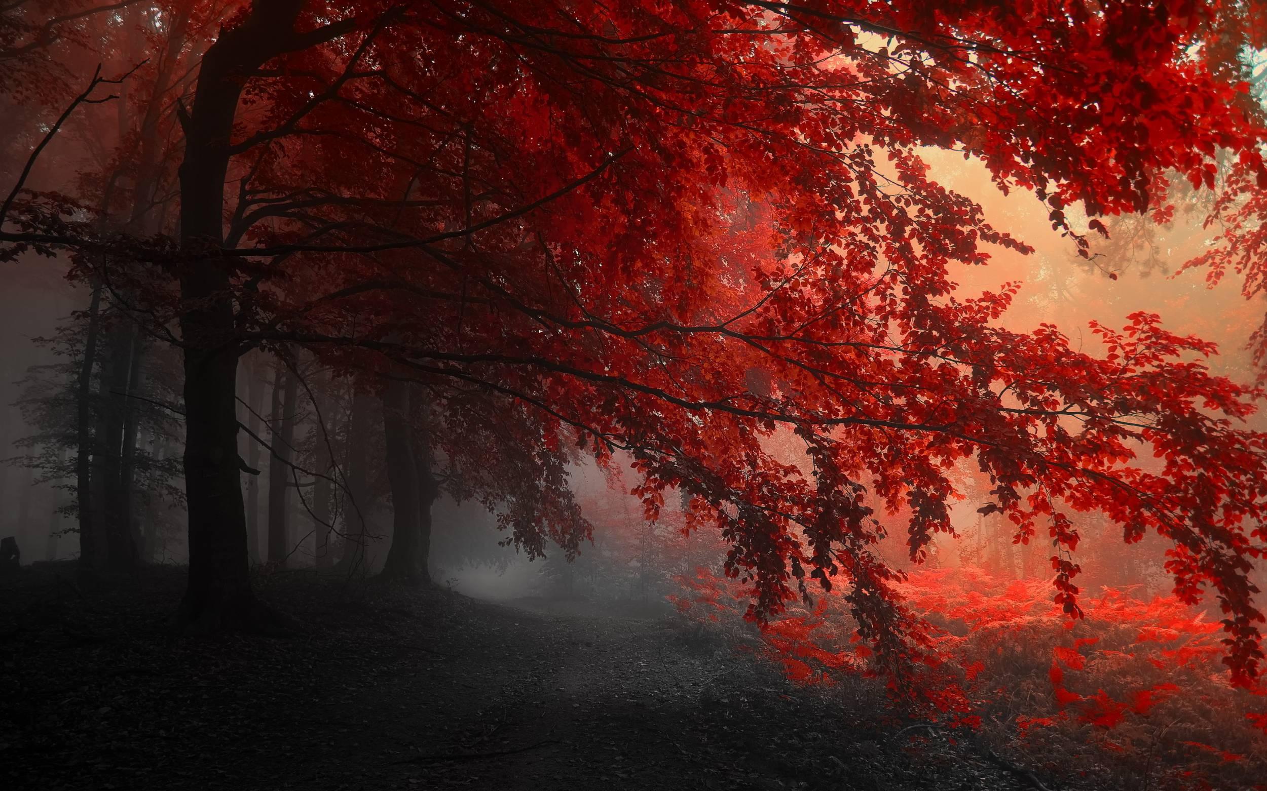 بالصور خلفية حمراء , خلفيات حصرية باللون الاحمر 4670 4