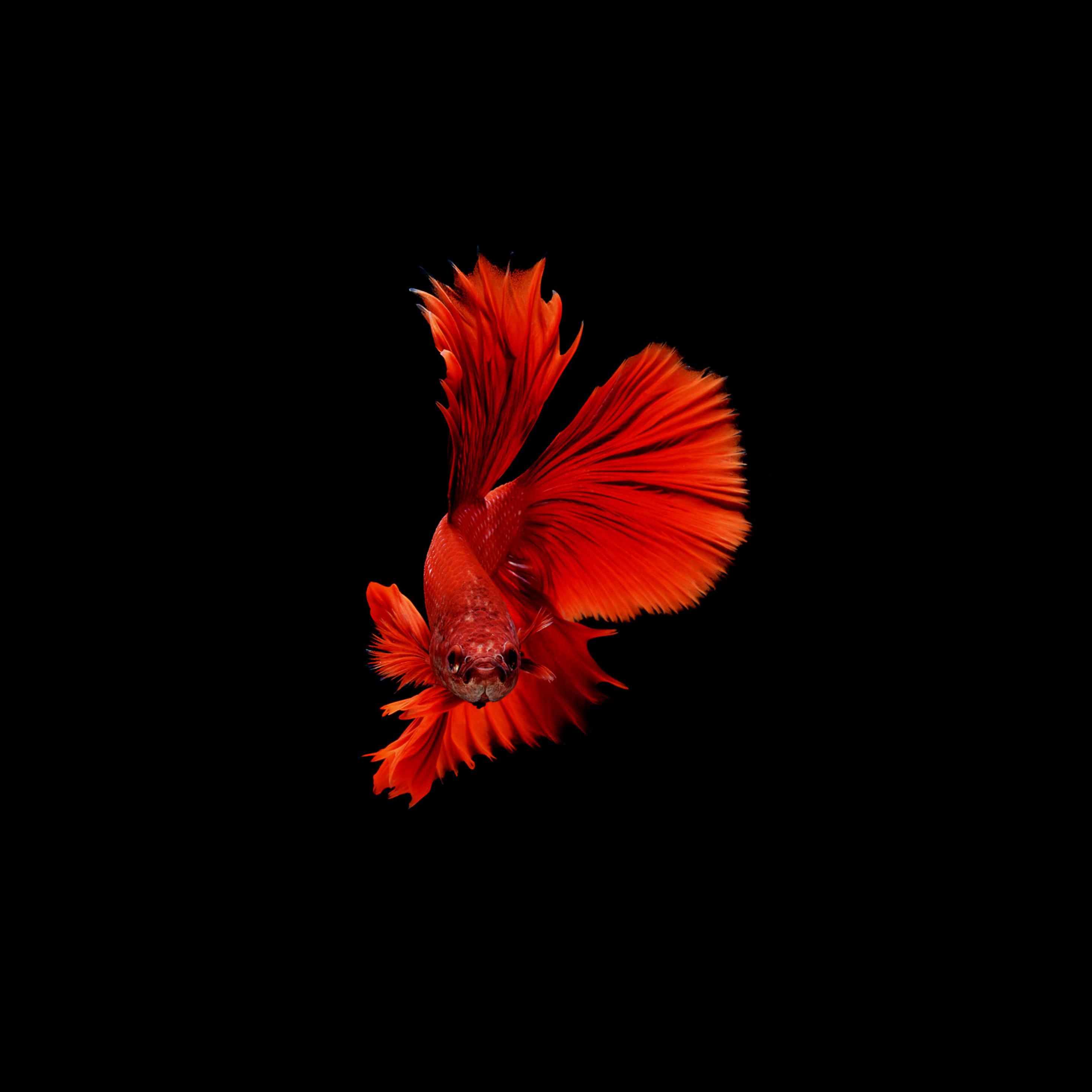 بالصور خلفية حمراء , خلفيات حصرية باللون الاحمر 4670 6