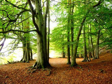 صورة صور اشجار , صورة حشائش و اشجار و شجيرات