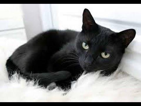 صور رؤية القطط بالمنام , تفسير احلام رؤية القطط