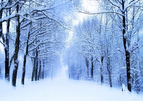 بالصور صور عن الشتاء , خلفيات عن البرد 6432 6