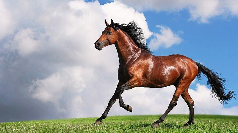 صوره صور حصان , مناظر طبيعية مع الحصان