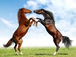 بالصور صور حصان , مناظر طبيعية مع الحصان 6724 2