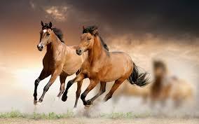 بالصور صور حصان , مناظر طبيعية مع الحصان 6724 5