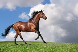 بالصور صور حصان , مناظر طبيعية مع الحصان 6724 8