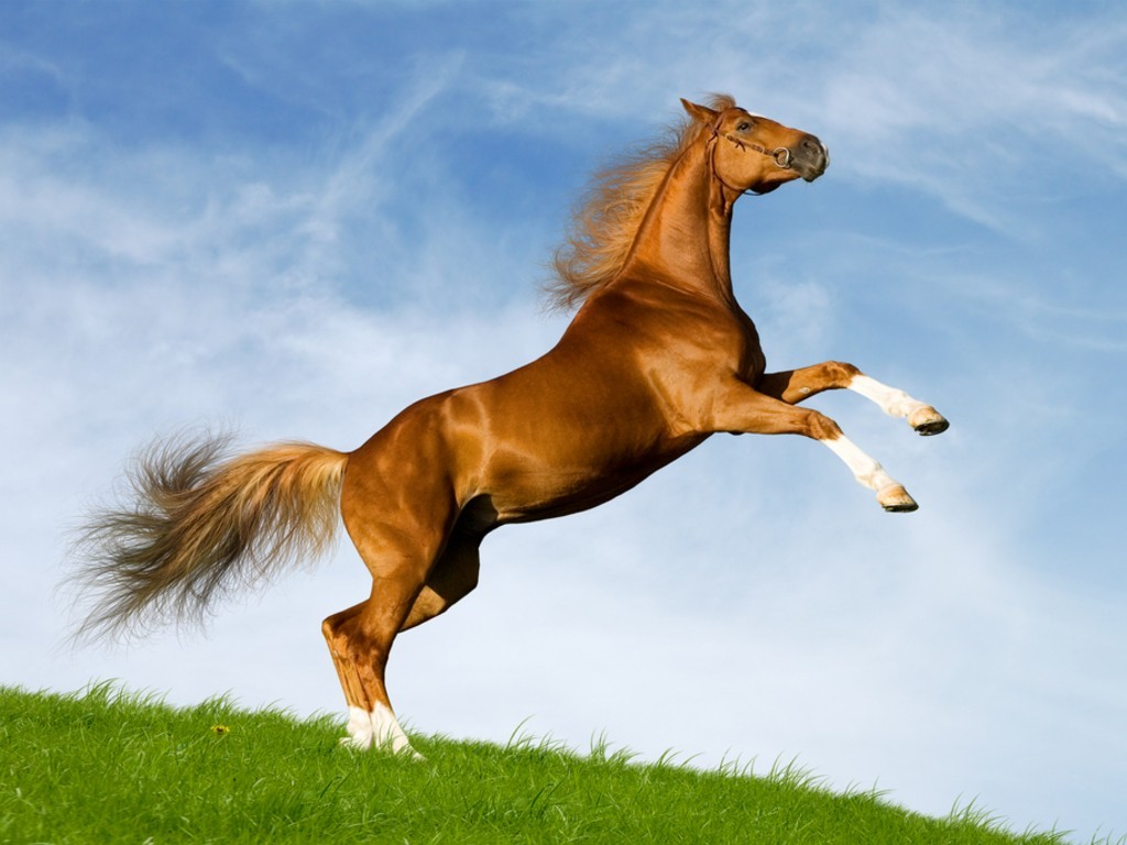 بالصور صور حصان , مناظر طبيعية مع الحصان 6724