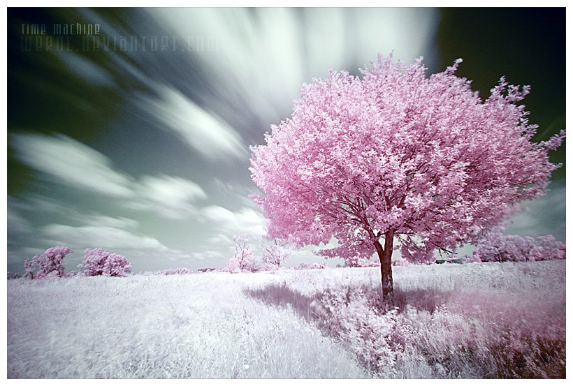 بالصور صور الطبيعة الجميلة , اجمل الصور لمناظر الخلابة 2911 10