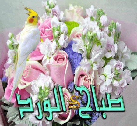 بالصور احلى صباح الخير , صور جميلة مكتوب عليها صباح الخير 3196 6