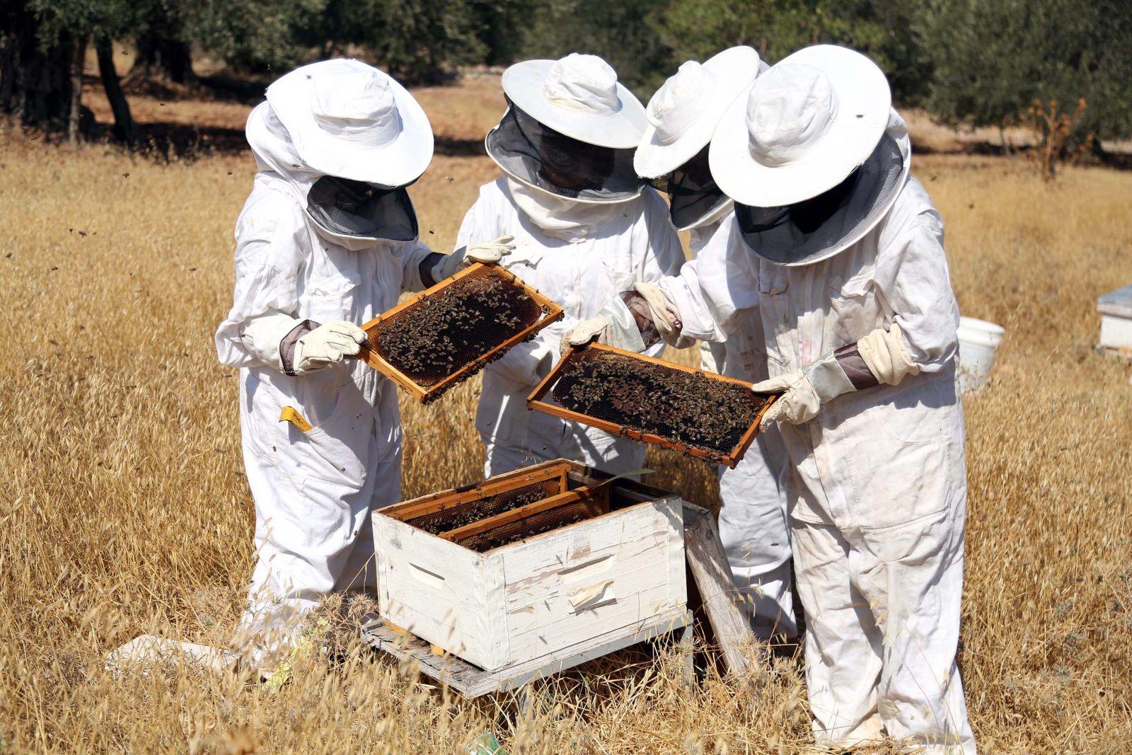 صور تربية النحل , تربية النحل من الالف للياء