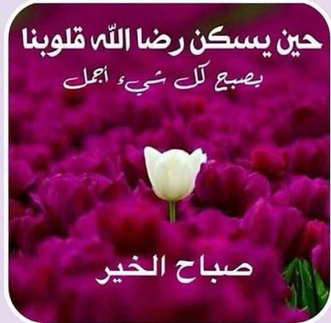 بالصور صور صباح خير , اجمل صور صباح الخير 3819 1