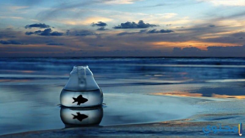 بالصور صور عن البحر , اجمل صور للبحر 3921 6