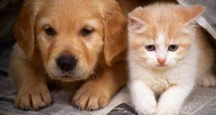 قطط وكلاب , اجمل صور القطط والكلاب