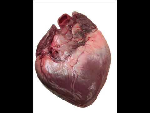 صورة صور قلب الانسان , قلب الانسان