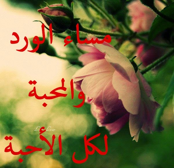 بالصور مساء الخير كلمات , عبارات مساء الخير 5290 7