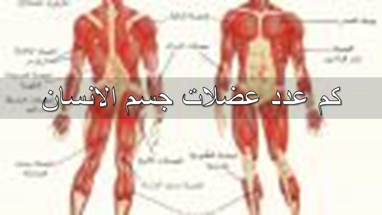 صورة كم عدد عضلات جسم الانسان , عدد الانسان البشرى