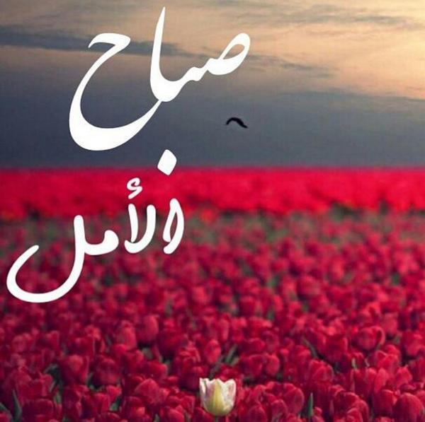 بالصور بيسيات صباحيه , توبيكات بداية اليوم 6212 9