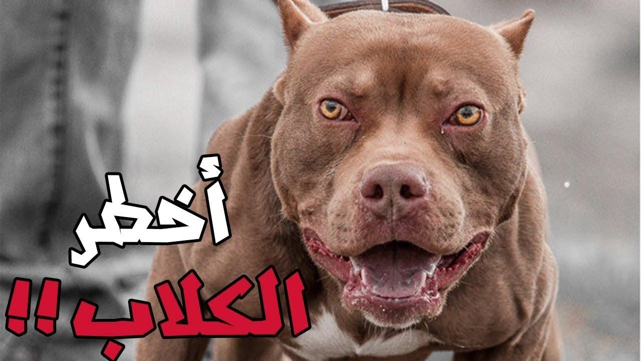 بالصور اخطر انواع الكلاب , صورة اشرس كلب فى العالم 2143 4