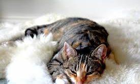 صوره صور قطط مضحكة , اجم صور للقطط2019