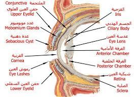 صور مكونات العين , تعرف علي تكوين عين الانسان