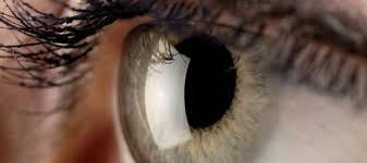 بالصور مكونات العين , تعرف علي تكوين عين الانسان 2693 6