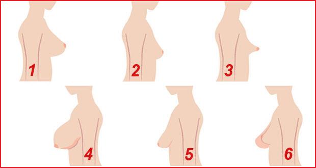 صورة انواع ثدي المراة بالصور , بالصور الاشكال المختلفه لثدى المراه