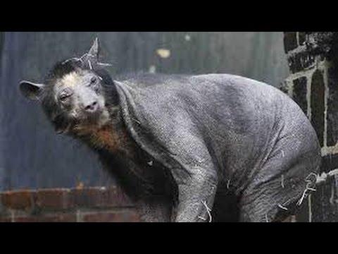 بالصور اغرب الحيوانات , صور اغرب حيوان فى العالم 3143 2