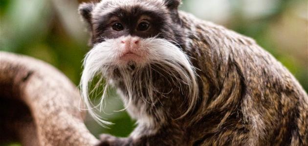 بالصور اغرب الحيوانات , صور اغرب حيوان فى العالم 3143 3