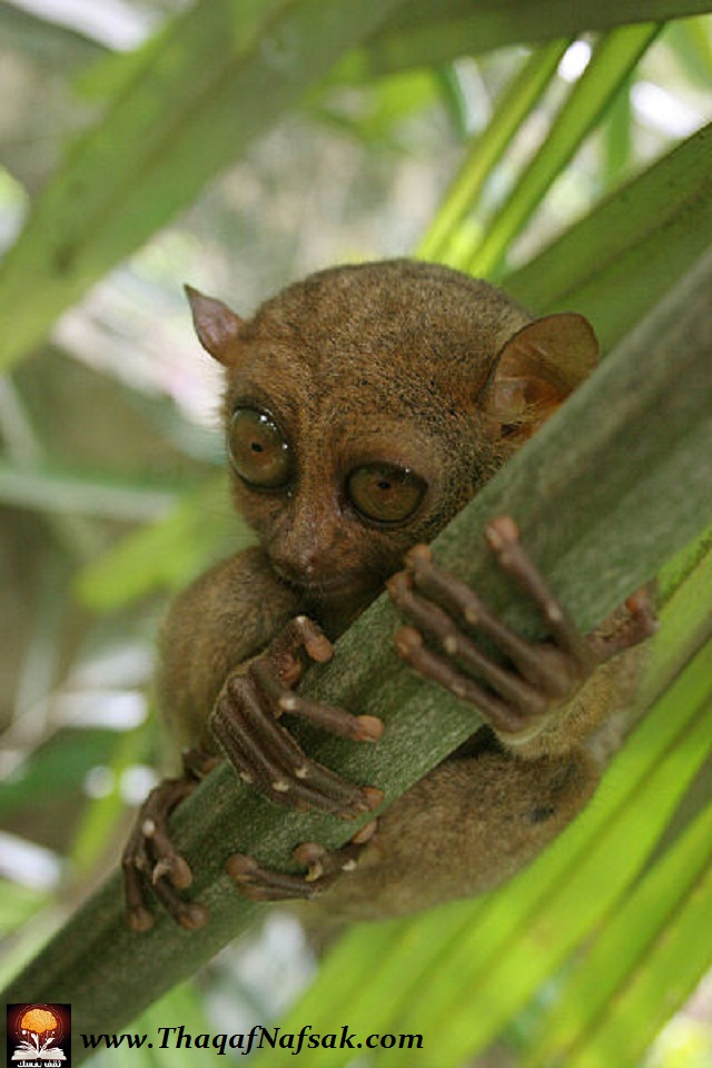 بالصور اغرب الحيوانات , صور اغرب حيوان فى العالم 3143 4