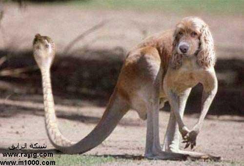 بالصور اغرب الحيوانات , صور اغرب حيوان فى العالم 3143 8