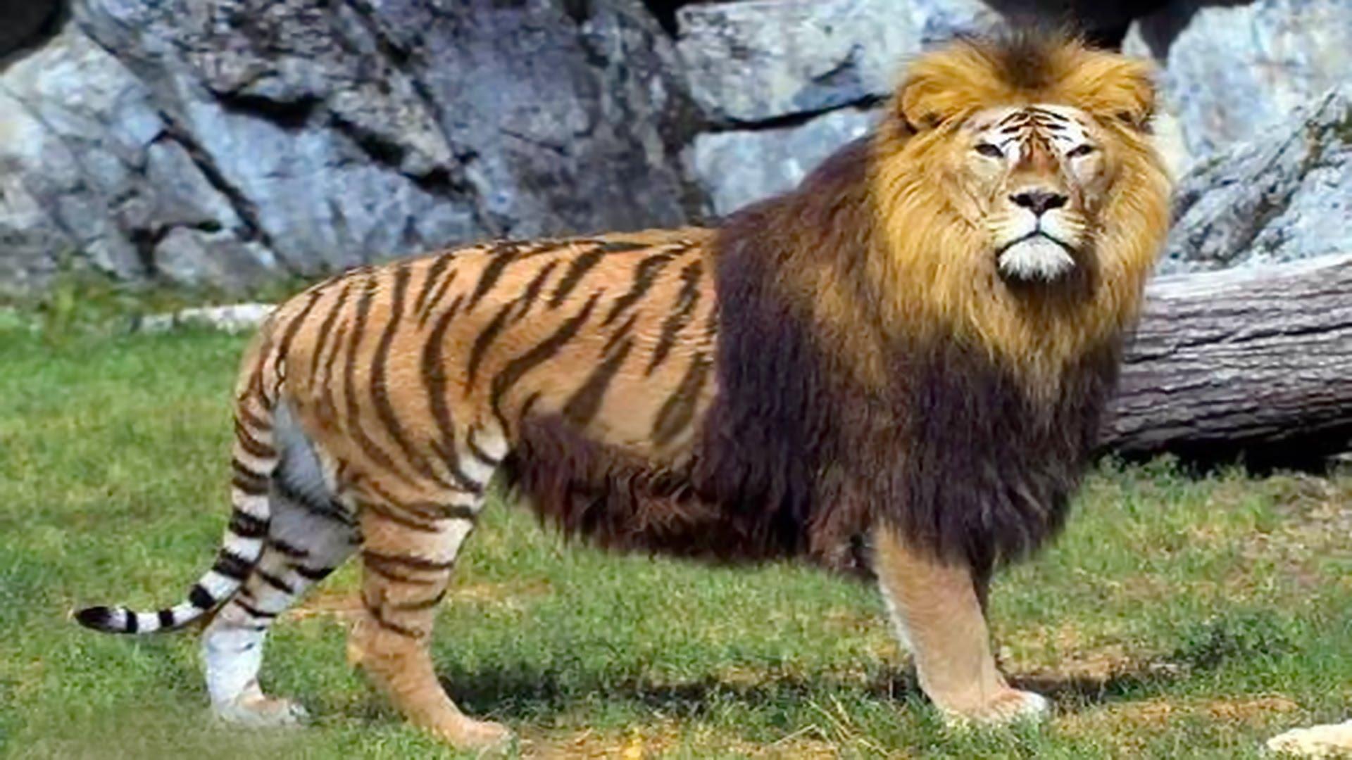 بالصور اغرب الحيوانات , صور اغرب حيوان فى العالم 3143 9