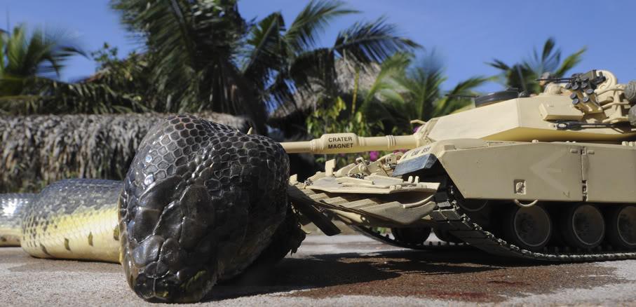 صورة اكبر ثعبان في العالم , صور اكبر الثعابين فى العالم ثعبان الاناكوندا