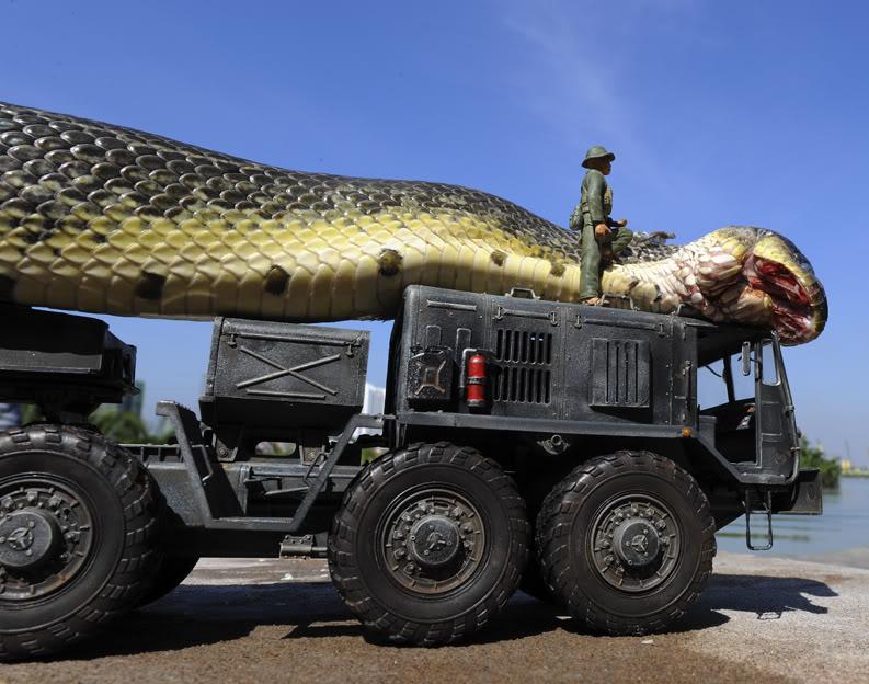 بالصور اكبر ثعبان في العالم , صور اكبر الثعابين فى العالم ثعبان الاناكوندا 3149 5