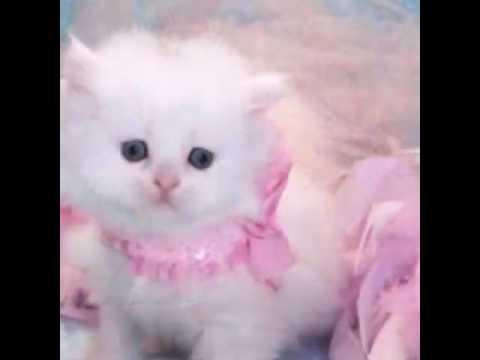 بالصور اجمل الصور للقطط في العالم , اجمل صورة قطه فى العالم 3166 11