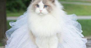 اجمل الصور للقطط في العالم , اجمل صورة قطه فى العالم