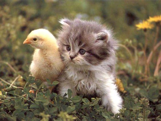 بالصور اجمل الصور للقطط في العالم , اجمل صورة قطه فى العالم 3166 2