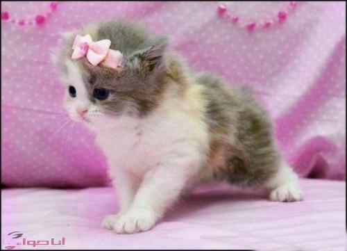 بالصور اجمل الصور للقطط في العالم , اجمل صورة قطه فى العالم 3166 3