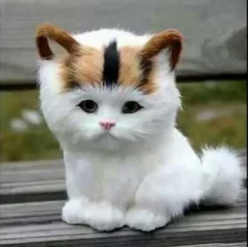 بالصور اجمل الصور للقطط في العالم , اجمل صورة قطه فى العالم 3166 4