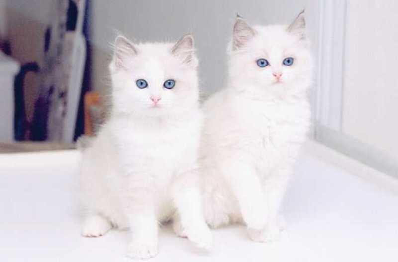 بالصور اجمل الصور للقطط في العالم , اجمل صورة قطه فى العالم 3166 5