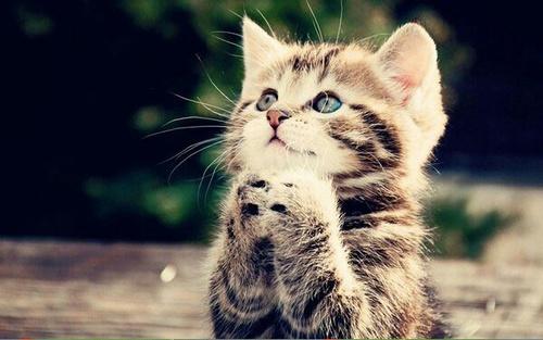 بالصور اجمل الصور للقطط في العالم , اجمل صورة قطه فى العالم 3166 6