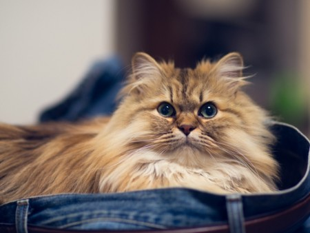 بالصور اجمل الصور للقطط في العالم , اجمل صورة قطه فى العالم 3166 8