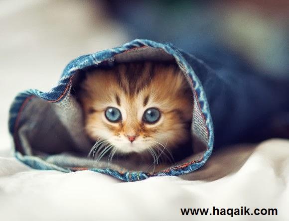 بالصور اجمل الصور للقطط في العالم , اجمل صورة قطه فى العالم 3166 9