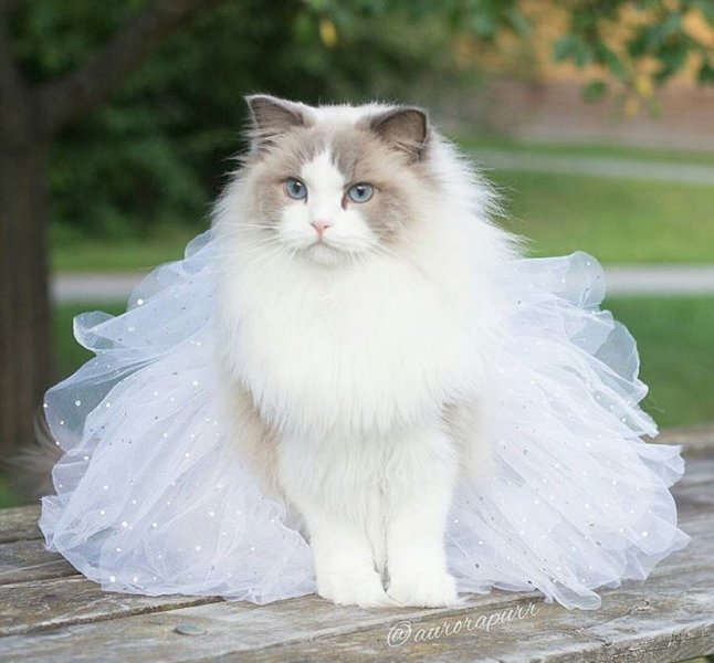 بالصور اجمل الصور للقطط في العالم , اجمل صورة قطه فى العالم 3166