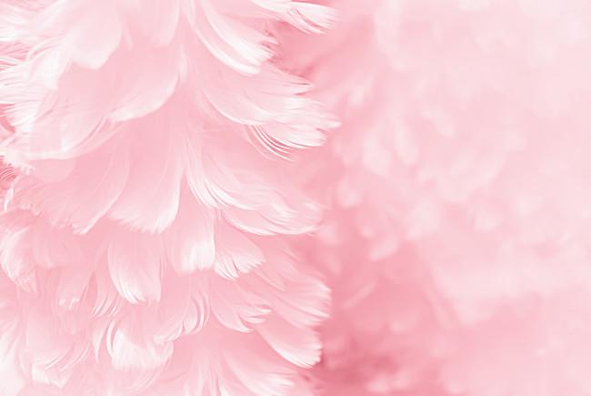 بالصور خلفيات وردية , خلفيات رائعه وجميله 3918 3