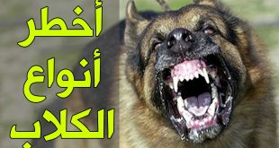 بالصور اشرس انواع الكلاب , اكثر انواع الكلاب شراسة 4046 2 310x165
