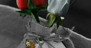 صوره صور ورد رومانسيه , ارق صور ورد رومانسية