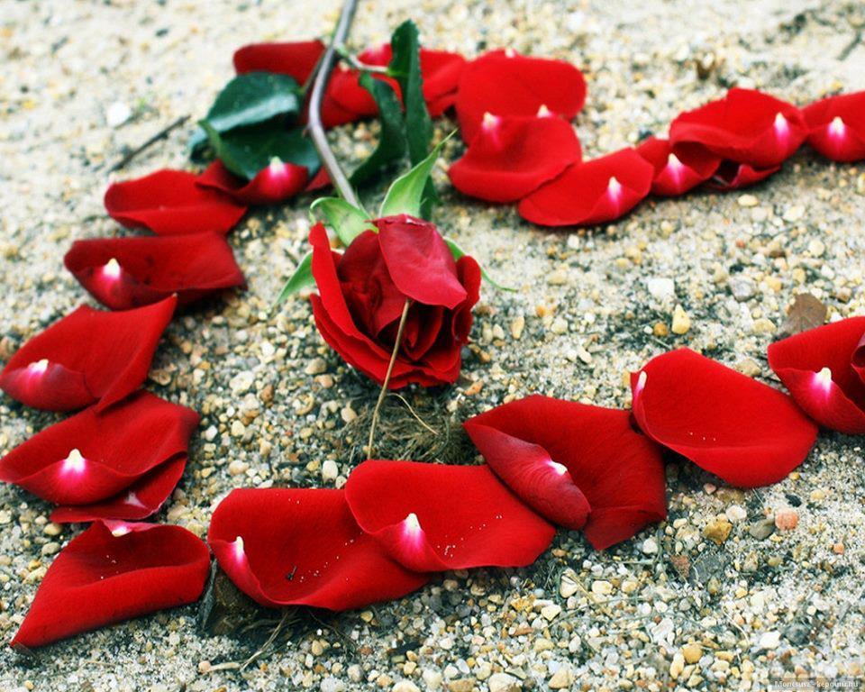 بالصور احلى صور رومانسيه , اجمل صور الحب و الرومانسية 1208 1