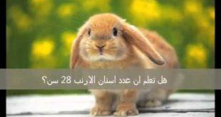 بالصور هل تعلم عن الحيوانات , معلومات متنوعة عن الحيوانات 1269 10 310x165